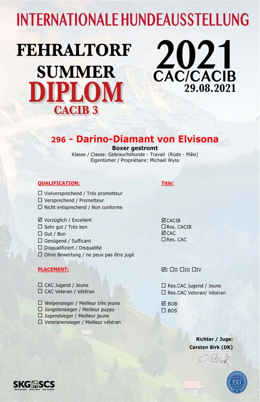 Certificate Darino V1 CAC CACIB BOB