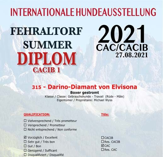 Darino in Fehraltdorf 08.2021